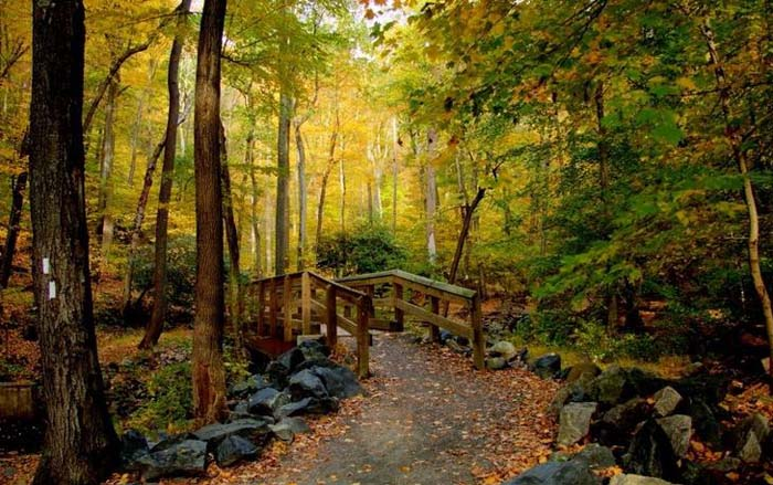 Dunnfield Natural Area, Appalachian Trail crossing. Photo by Penns Woods Photography, Pinterest