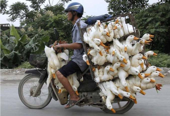 Off to market. Photo by Yahoo News France