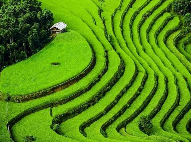 Sa Pa has an abundance of rice fields, which glow a rich green color after monsoon season. Photo by CNBC