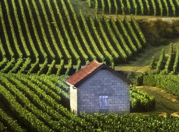 Wine Vinyard in Champagne Provence, France. Photo by Tori Deville, Pinterest.