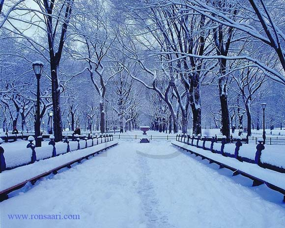 Wintertime in Central Park, NY. Photo by Ronsaari, Pinterest