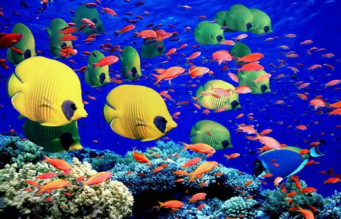 An underwater world to explore. Photo fouby greatbarrier reef holiday.com.au