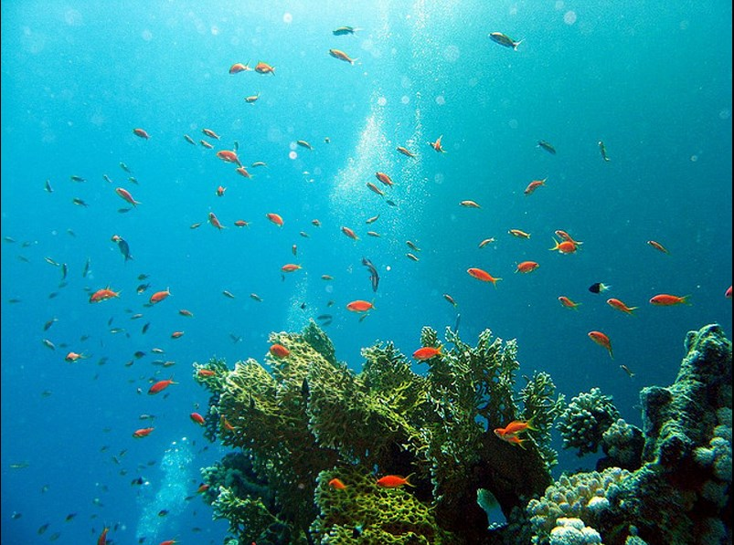 Incredible places to dive around the world: School of Scalefin Anthias in the Red Sea. Photo by Eric, flickr