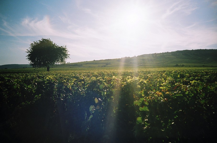 Exploring wine routes in Burgundy
