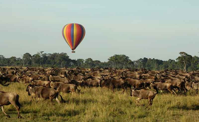 Wildebeest migration at Masai mara national park Kenya Africa. Photo by bogspot.com