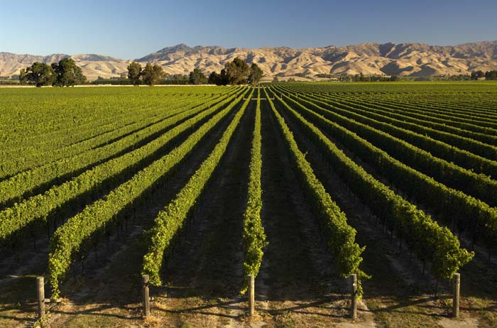 Visit one of the many Marlborough Vineyards. Photo by lovemarlborough.co.nz
