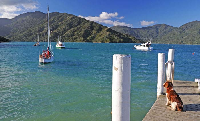 Punga Cove pier, Queen Charlotte Sound. Photo by pungacove.co.nz