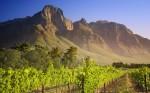 South Africa's Finest: Wine tasting in Stellenbosch vineyards