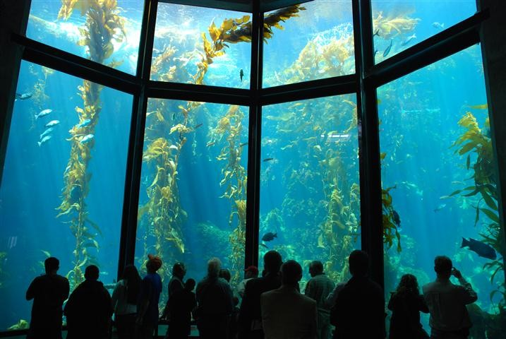 diving in kelp forests in California:Observation area in Monterey Bay. Photo by Tourism  Review