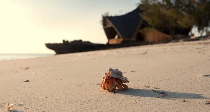 A lone crab finds solice at Chumbe Island. Photo via chumbeisland