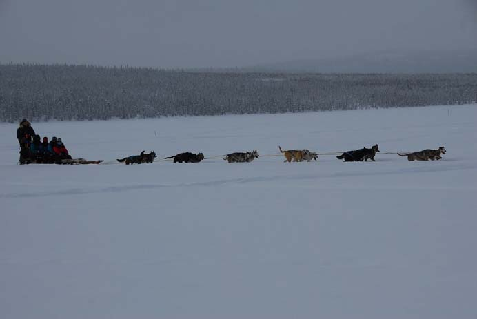 Take advantage of the natural scenery by taking a dogsled through the woods. Photo by Gerard McGovern, Flickr.