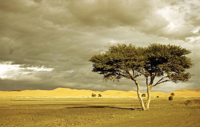 Merzoug's desert is a popular destination for camel safari. Photo by Christiaan Triebert, Flickr