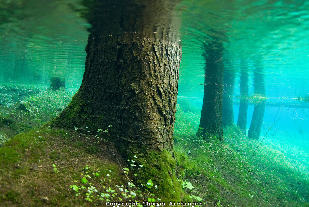 The natural beauty and bizarre nature of Green Lake. Photo by Thomas Aichinger. Photo by Photoshelter.com