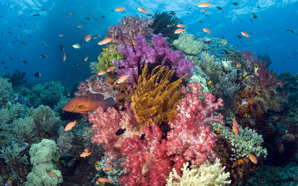 Raja Ampat has some of the most colorful corals found anywhere on Earth