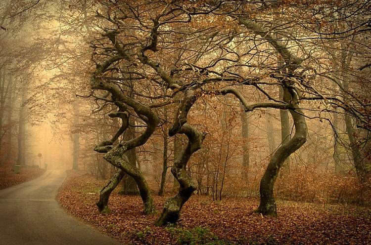 Dancing Trees, Unknown Location. Björn Olsson