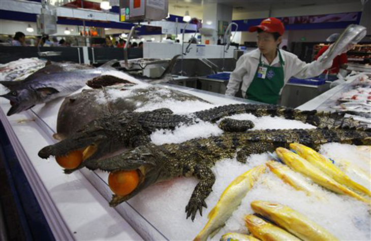 Crocodiles ready for sale in Walmart, China.