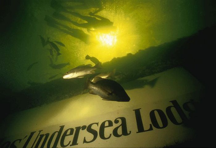 Dive into Jules Undersea Lodge to experience life with the local fish. Photo via zazuzoom.com.ua
