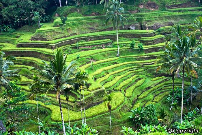 Bali's cultural heart, Ubud is located in the cool mountains. Photo by Bali-Indonesia