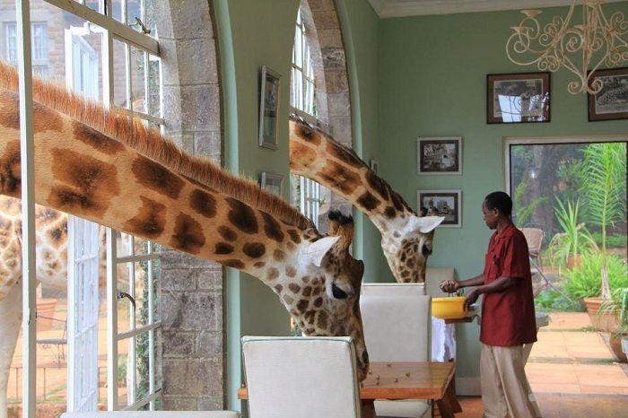 Breakfast time inside Giraffe Manor. Photo via lostinmylittleworld.com