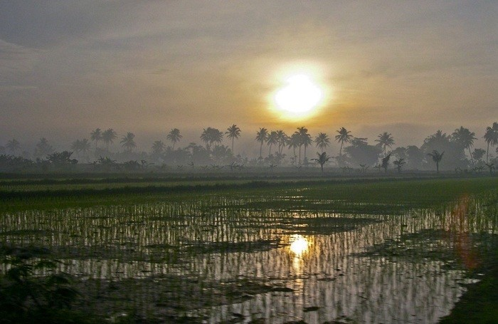The sun rises over lush green rice fields nearby Yogyakarta. Photo by Marc-Andre Jung, Flickr