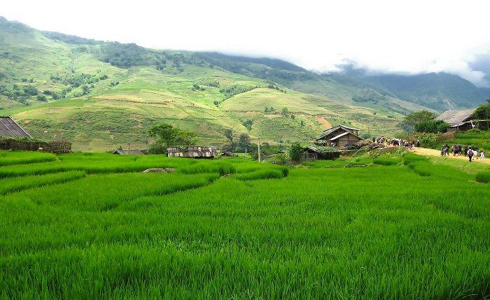 Don Khong rice fields. Photo by treasuresofvietname.blogspot.com