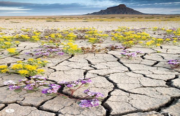 desert badlands terre aride fleurs