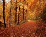 9 Incredible Places to see Autumn Colours This Year