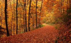 Germany's forests provide a gorgeous autumn scene that rivals anything in the USA. Image via Mountain Photography.