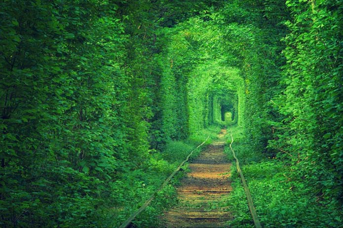 Lost and forgotten, nature has grown around passing trains. Image via Distractify