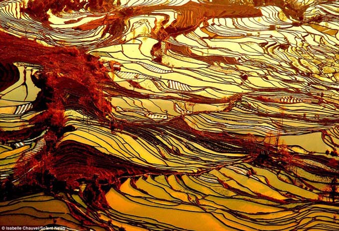 A landscape that looks more like a drawing. Image via Distractify.