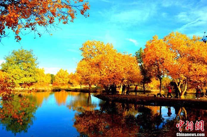 Dandenong Ranges puts on an incredible autumn display. Image via Dandenong Ranges Photography.
