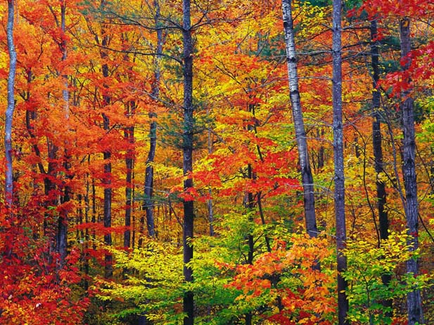 New Hampshires trees are famous for their vivid autumn hues. Image via Landscape Photography.