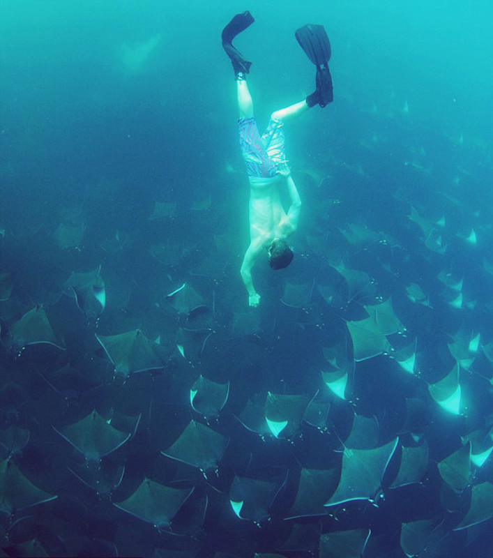 Mass migration of rays in Mexico