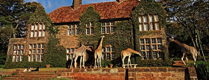 Cheeky giraffe are what makes this boutique hotel so spectacular. Photo by africanweddingstyle.com