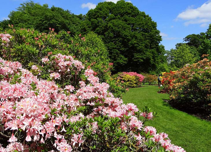 The Royal Botanic Gardens at Kew has a wide array of colourful plants. Image via UNESCO