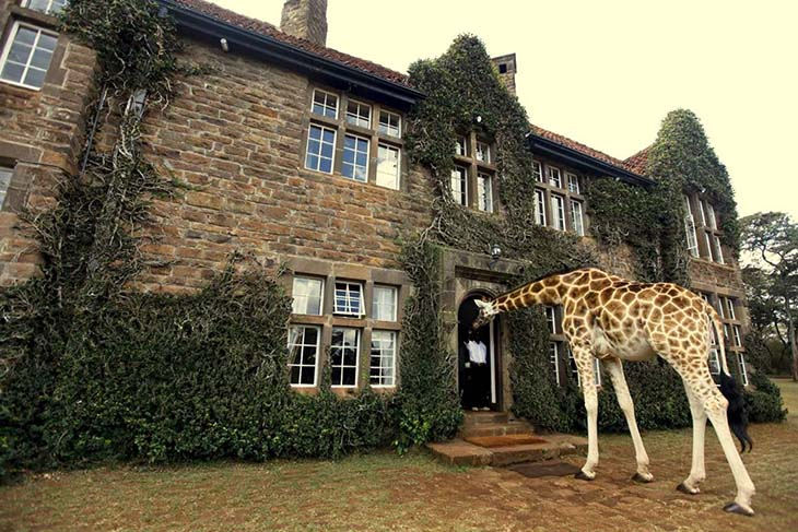 Giraffe Manor, Nairobi, Africa. Photo by koolrooms.com