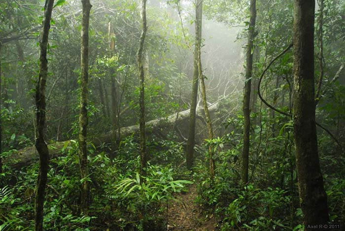 Thick Jungle with mist. Image iuw Flickr